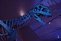 Majungasaurus ROM.jpg
