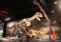 Majungasaurusvsrap.png