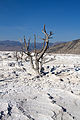 Mammoth Hot Springs 14 (8039039726).jpg