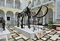 Mamut włochaty Muzeum Geologiczne w Warszawie.JPG