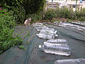 Many PET bottles for Stray Cat Repellent (7667737848).jpg