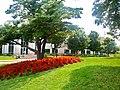 Maple Street - panoramio.jpg