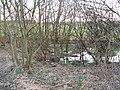 Marshy woodland, Byres Hill - geograph.org.uk - 370821.jpg