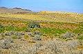 Mayamey - Khartouran - panoramio.jpg