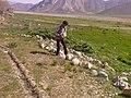 Me at work in Lar Nationl Park, Tehran, Iran دشت لار، اسب کُلک یا استر کلک، جلوگیری از فرسایش - panoramio.jpg