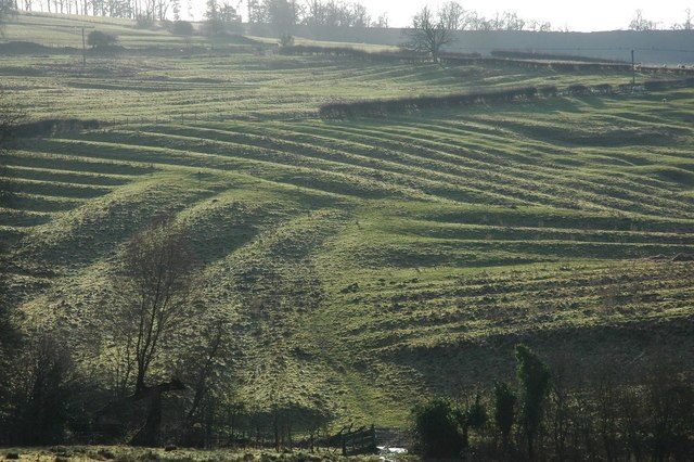 Medieval Ridge and Furrow above Wood Stanway - geograph.org.uk - 640050