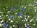 Mezei virágok.jpg