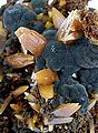 Mimetite-Wulfenite-mexw4-22b.jpg