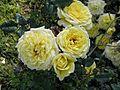Mini-Flora - Golden Trust 2 (b).JPG