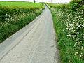 Minor road to Llangynin - geograph.org.uk - 1319283.jpg