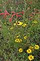 Mixed wildflowers (6798019207).jpg