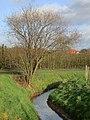 Molenbeek Gingelom - panoramio.jpg