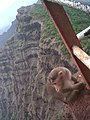 Monkey at mahableshwar.jpg