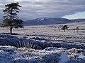 Moorland Near Carn Sleamhuinn - geograph.org.uk - 1102474.jpg