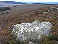Moorland above Kielder - geograph.org.uk - 1546488.jpg