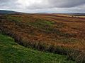 Moors near Fingland - geograph.org.uk - 267336.jpg