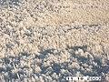 Moose Survey, Yukon-Charley, 2003 2 (5db7829c-eb60-41b2-a77d-719bc586f77f).jpg