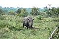 Mr Rhino and his midden (393129171).jpg