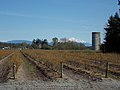 Mt Baker and local farm - panoramio.jpg