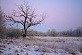 Muldeauen im Winter k1.jpg