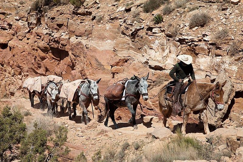 File:Mule train.jpg