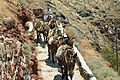 Mules on the way from Oia to Armeni,Santorini, 176667.jpg