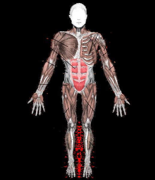 musculo esqueletico yahoo dating