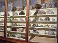 Museum für Naturkunde Berlin February 2008 0020.JPG