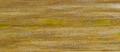 Mycosphaerella graminicola 14.png