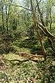 NSG Bildchen Wald 1.jpg