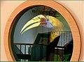 Nashornvogel - panoramio (1).jpg