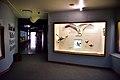 National Museum, Bloemfontein, Free State, South Africa (20349766550).jpg