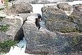 Natural Bridge, Yoho National Park IMG 5017.JPG