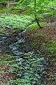 Naturbëschreservat «Beetebuerger Bësch»-104.jpg