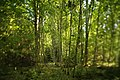 Naturdenkmal Dolinenketten Oberer Wald (4 Dolinen), Kennung 81150100016 08.jpg