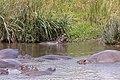 Nature of Ngorongoro Conservation Area (143).jpg