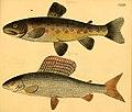 Naturgeschichte in Bildern mit erläuterndem Text (Taf. CXXV) (6059228238).jpg