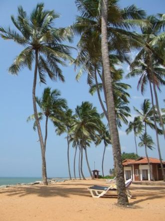 Sri Lankan place name etymology - In both Sinhala and Tamil, coconut trees often lend their names to the places where they are frequently found
