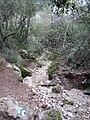 Nesher, Park Nesher, Wadi Katia 042.JPG