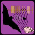 Neuroethology of bat echolocation.png