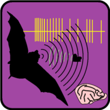 Neuroethology of bat echolocation.png