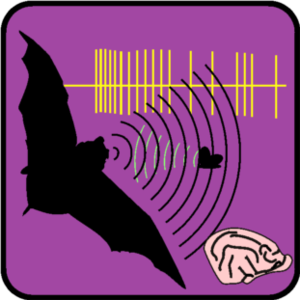 Neuroethology - Echolocation in bats is one model system in neuroethology.