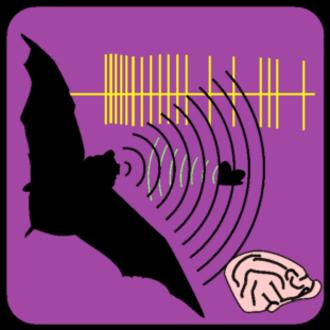 Neuroethology - Echolocation in bats is one model system in neuroethology.