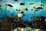 Niigata City Aquarium (26182085663).jpg