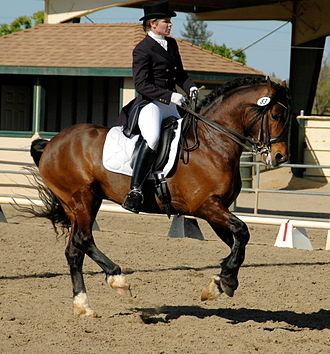 Lead (leg) - A horse in the midst of a flying change of lead, note position of diagonal front and hind legs.