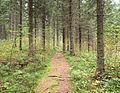 Nyrölä nature trail.jpg