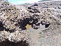 O amor esculpido nos corais.JPG