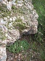 Oberthal-Teufelskanzel-20081026-11.jpg