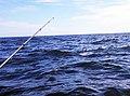 Ocean Sunfish - panoramio.jpg