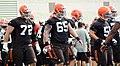 Offensive linemen 2014 Browns training camp.jpg